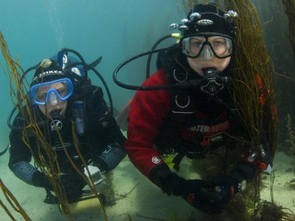 Thumbnail photo for 6 reasons why you should make learning to dive your post-lockdown activity