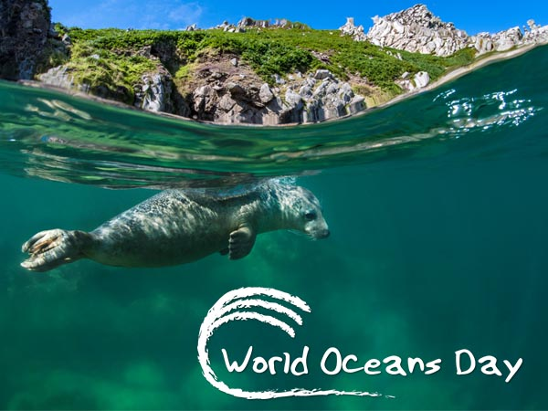 World Oceans Day 8 June 2018 image by Alex Mustard underwater photographer