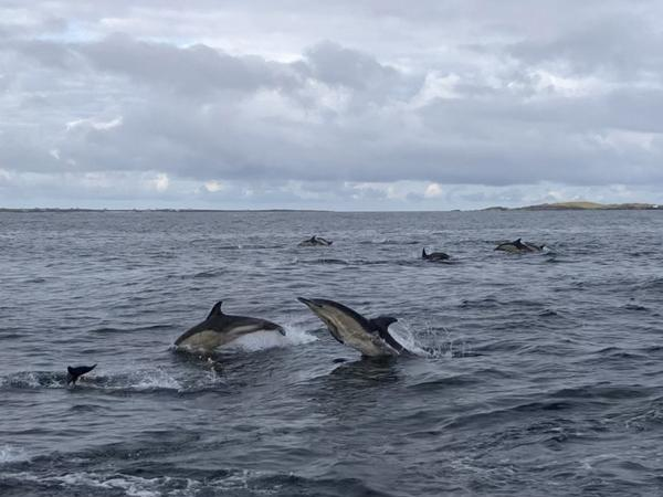 Thumbnail photo for BSAC lobbies for cetaceans in Scotland