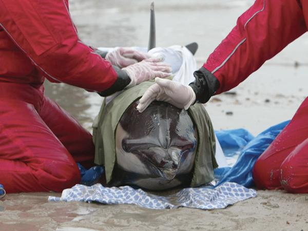 Thumbnail photo for New webinar on marine mammal rescue