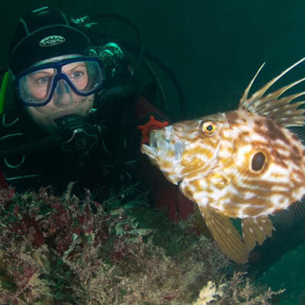 Thumbnail photo for Why scuba diving in the UK needs to be on your bucket list