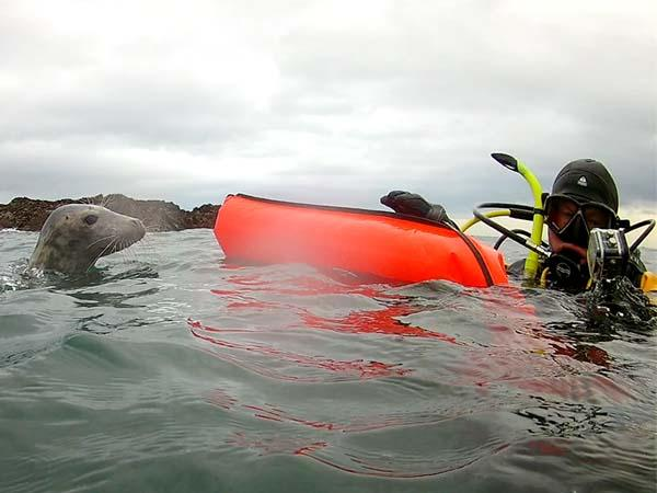 Mansfield Seahorse Divers go diving with seals in the Farne Islands
