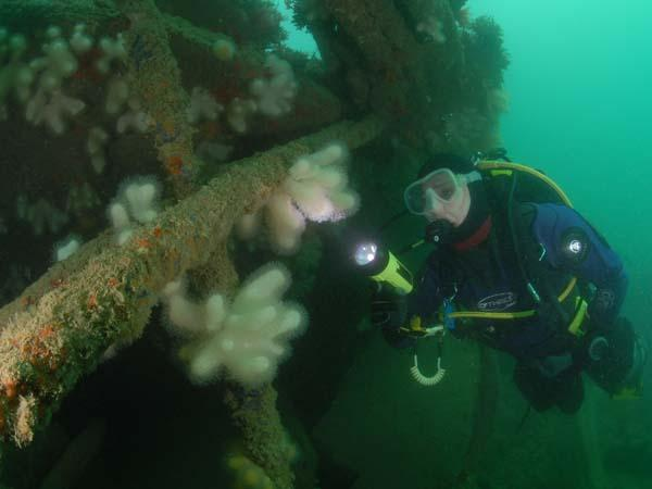 Thumbnail photo for BSAC supports new protection application for historic Mulberry harbour site