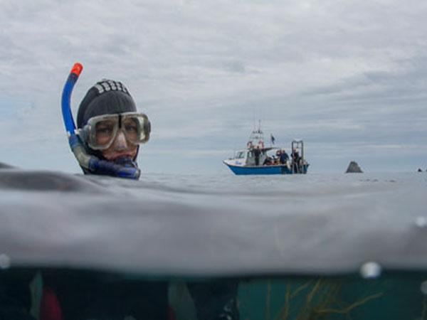 Thumbnail photo for Revised Snorkel Dive Manager Course - now available