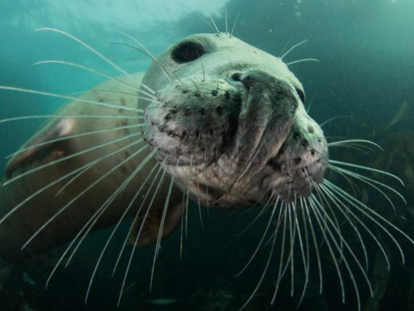Thumbnail photo for How to snorkel safely with seals