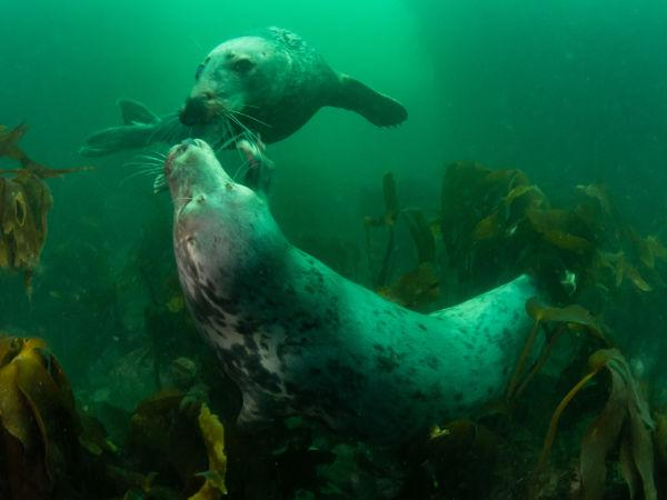 Thumbnail photo for Diving with seals at the Farne Islands