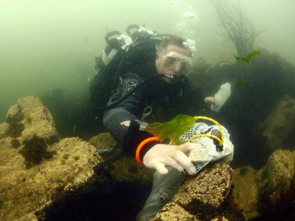 Thumbnail photo for BSAC urges all divers to help turn the plastic tide