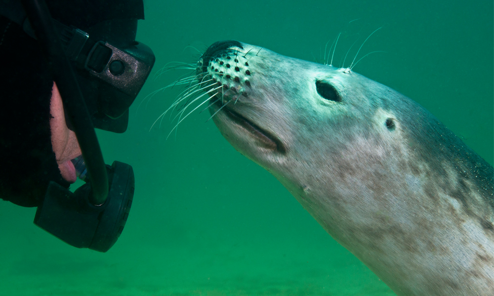 Diver and Seal with face mask to seals nose