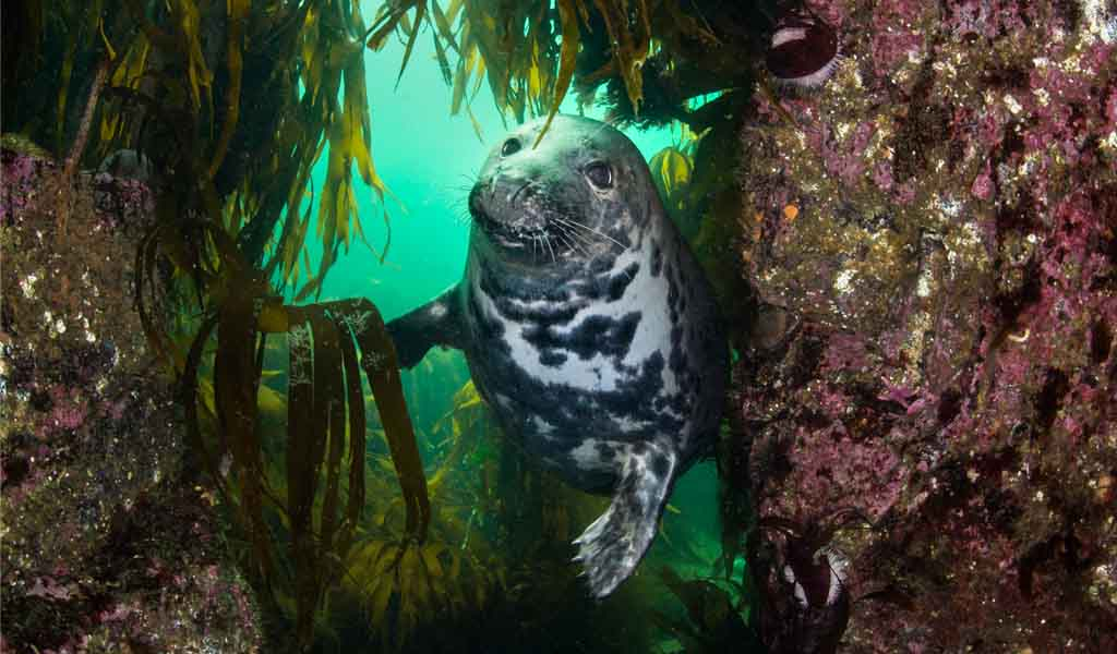 New to scuba - Farne Island seal