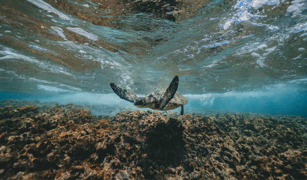 Turtle by Photo by Jakob Owens on Unsplash