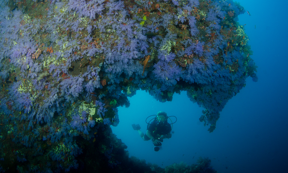Soft coral caverns and swim-throughs are a feature of the central atolls
